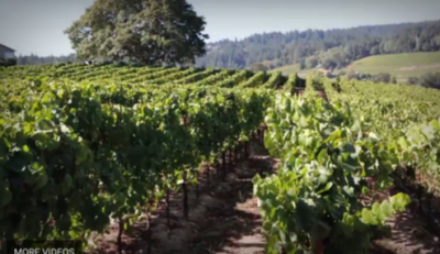 The Calling Pinot Noir – The Chateau At Home